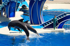 Find low fare tickets to Seaworld in Orlando