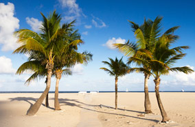 Find low fare tickets to tropical beach palm trees in Fort Lauderdale