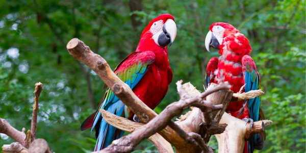 Discovering best natural attractions in Costa Rica