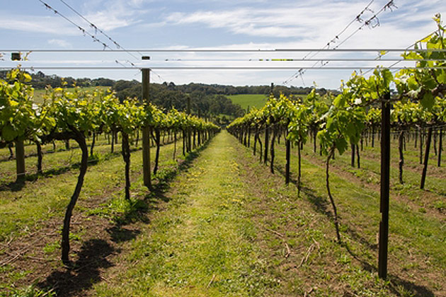 Enjoy Australia's Stunning Victorian wine Through Fare Buzz