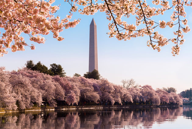 National Cherry Blossom Festival - Fare Buzz