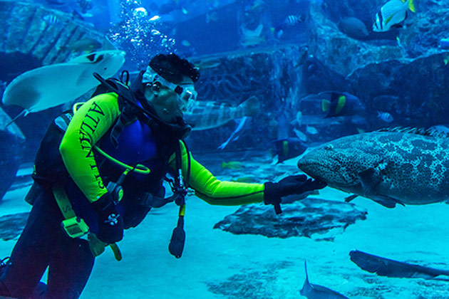 Enjoy under Water World With Fare Buzz