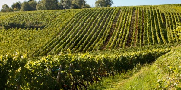 Mornington Peninsula, Australia – Stunning Victorian wine region