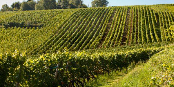 Mornington Peninsula, Australia – Stunning Victorian wine region