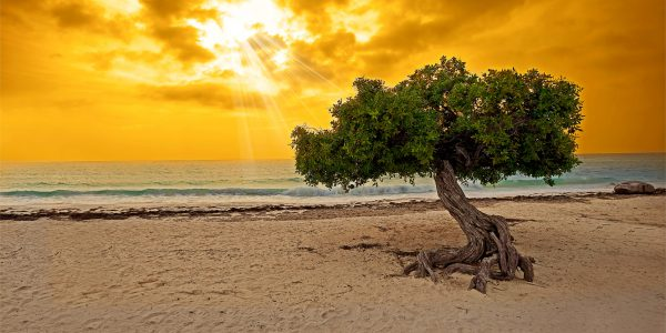 The top 4 things to do in Aruba