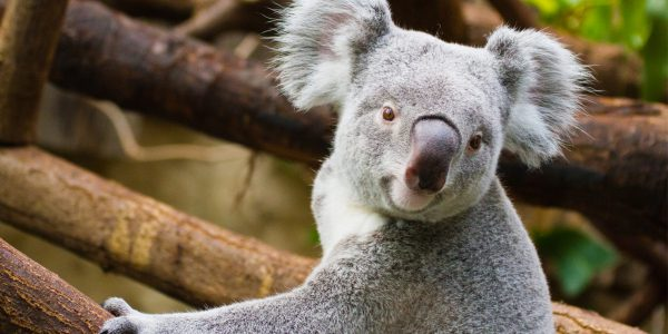Why Australia is perfect for animal lovers