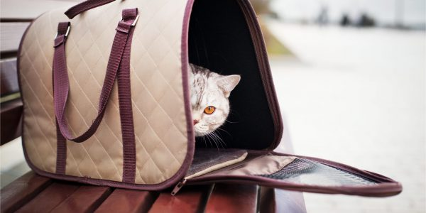Low Fares and Tips on Pet Travel