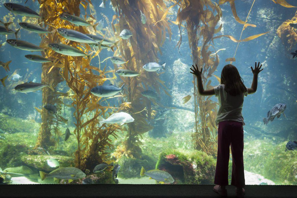 Honolulu Waikiki Aquarium