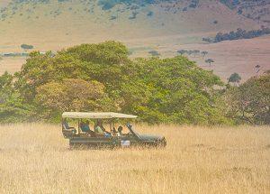 safari-grandparentss-Big